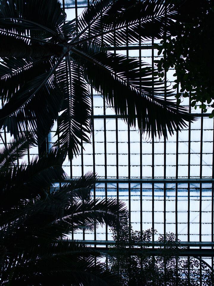 Bildstrecke Palmengarten 3