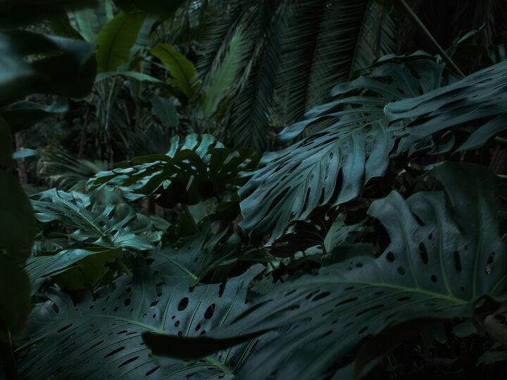 Bildstrecke Palmengarten 4
