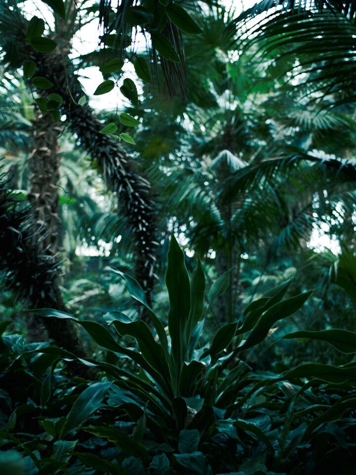 Bildstrecke Palmengarten 5