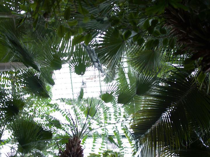 Bildstrecke Palmengarten 6