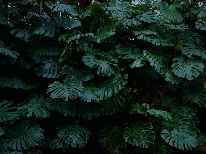 Bildstrecke Palmengarten 7