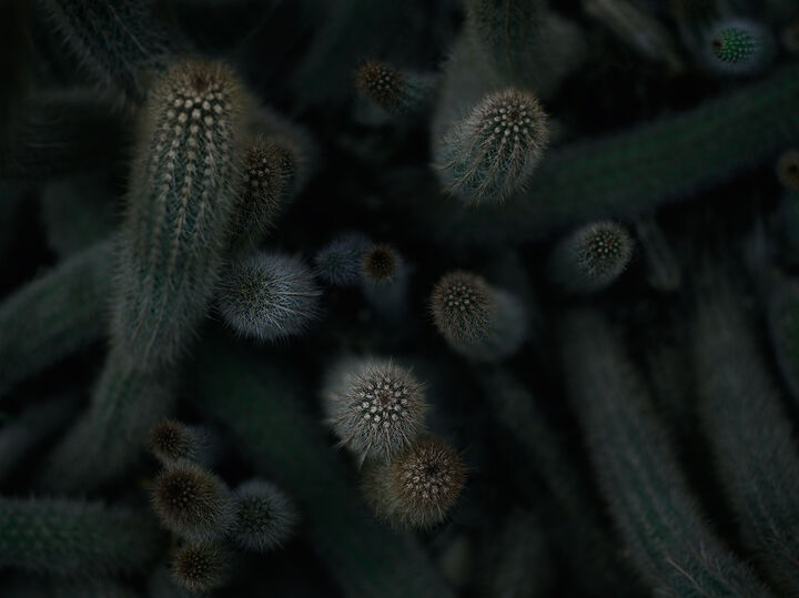 Bildstrecke Palmengarten 8