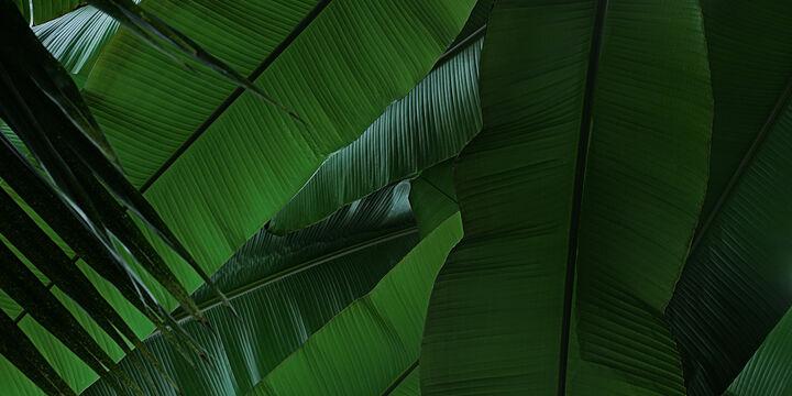 Bildstrecke Palmengarten 0