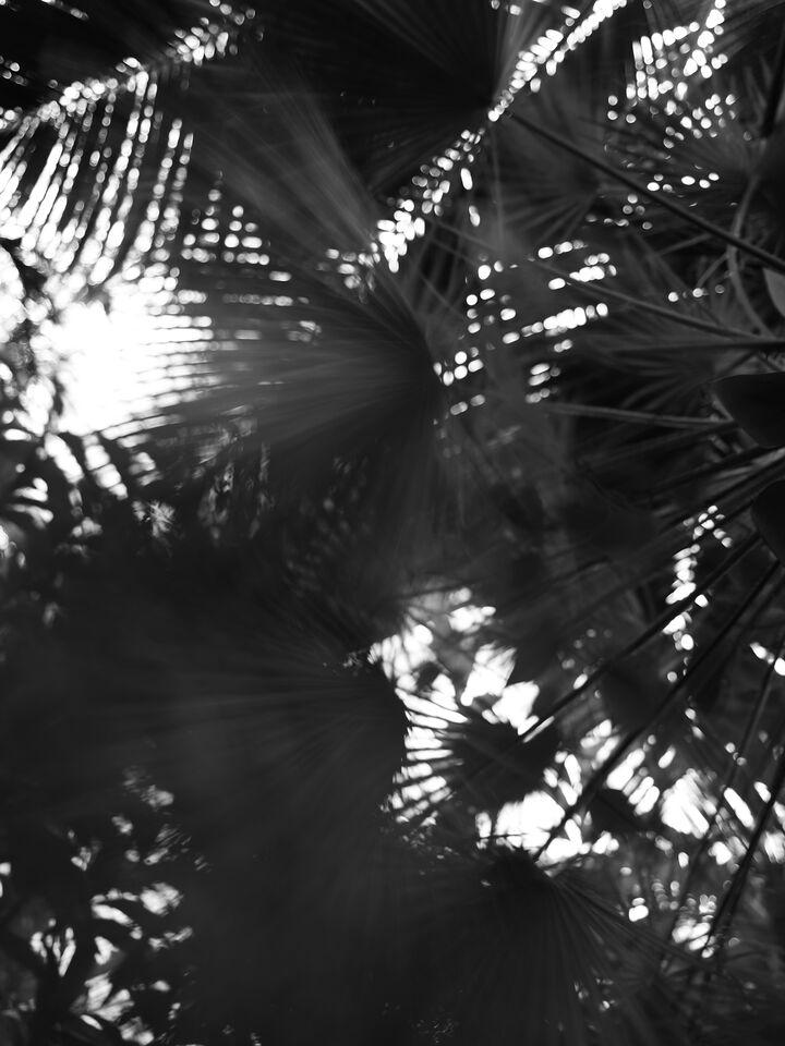 Bildstrecke Palmengarten 11