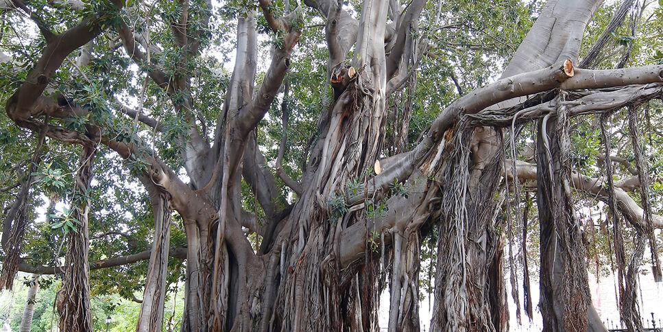 Nachhhaltigkeit Baum