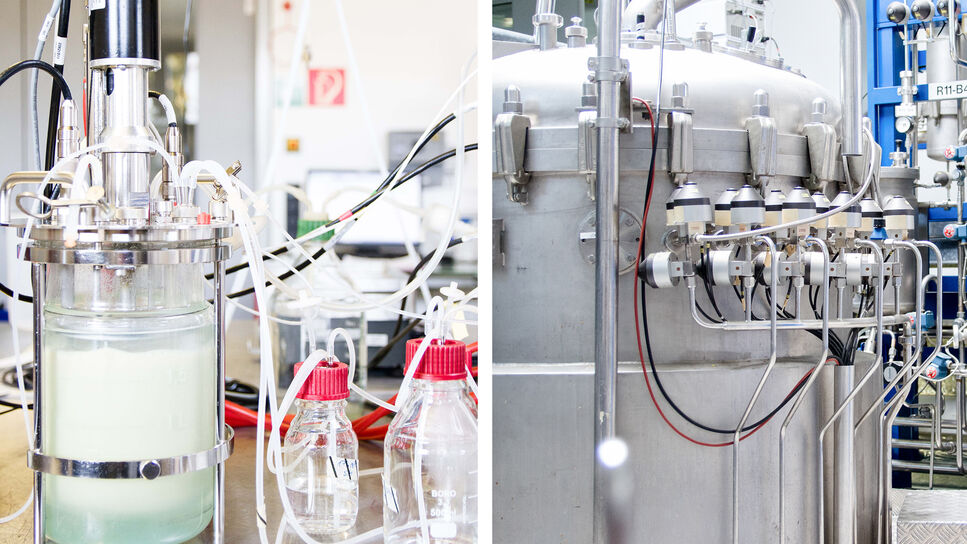 Fermentation in the BRAIN labs