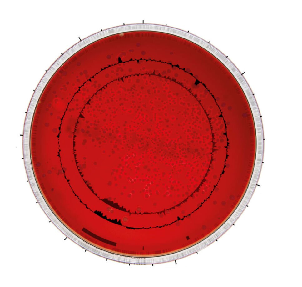 BRAIN pioneering bioproducts – a red petridish on white ground with a scientific graphic overlay